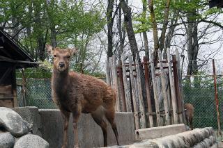 松本アルプス公園の動物園