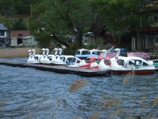 ハクチョウボート