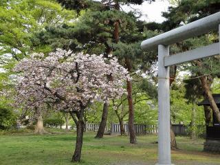 まだ桜が・・・