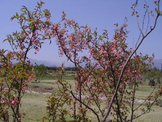 花木の小径