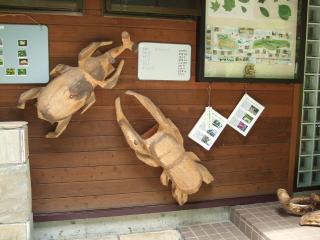 烏川渓谷緑地 カブトとクワガタ