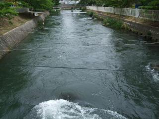 前川 カヌー競技場
