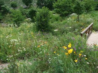 夢農場 色とりどりの草花