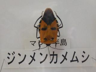 ジンメンカメムシ