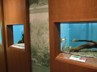 水族館のよう