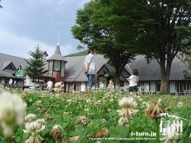 南アルプス村の前庭には、草木がいっぱい