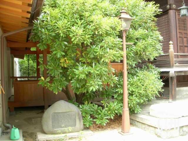 松本で最初の電燈