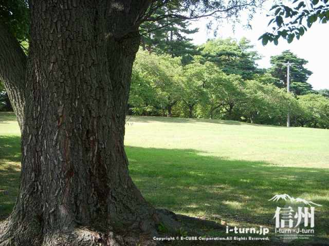 城山公園の広い芝エリア