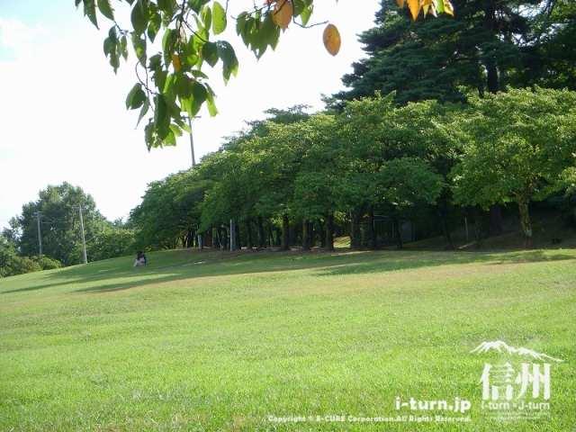 城山公園の芝エリアは広い