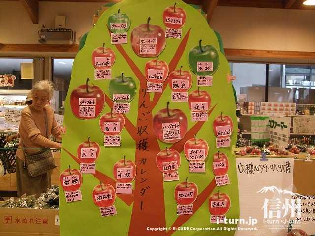 りんごの収穫カレンダー