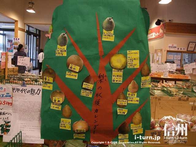 ナシの収穫カレンダー