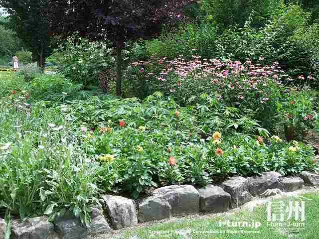 様々な植物が植えられています