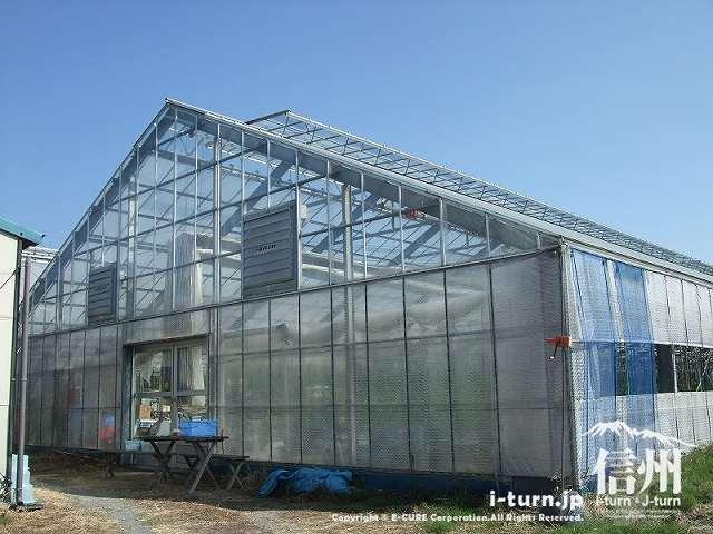 マジあまトマトが栽培されているハウス