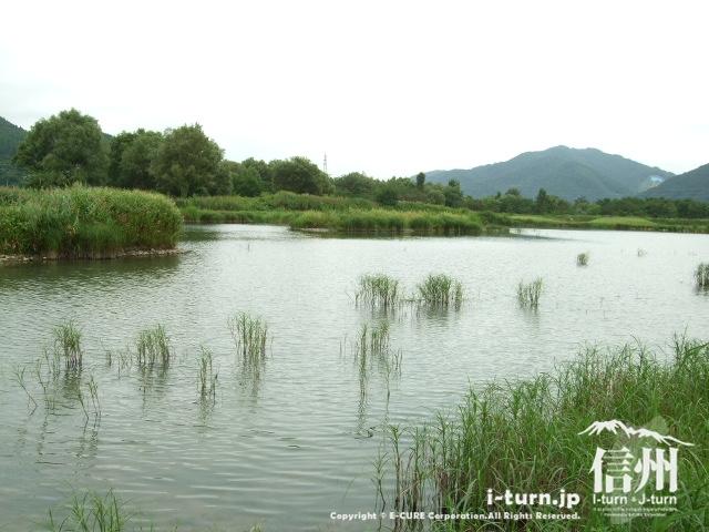 御法田遊水池
