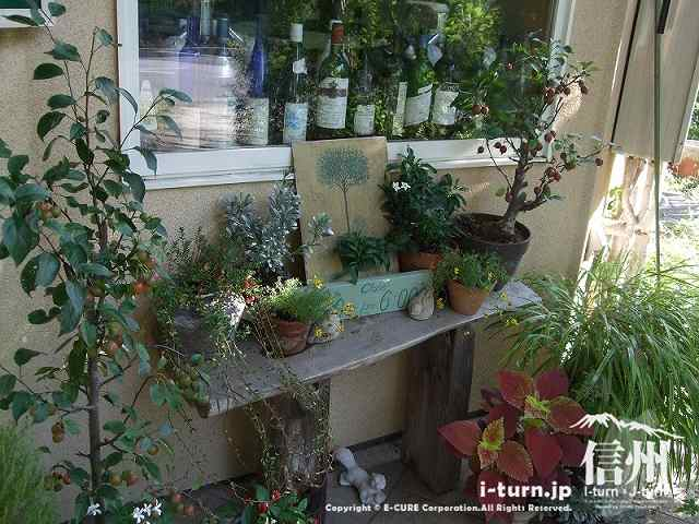 あづみ野の朝 入口にある植物たち