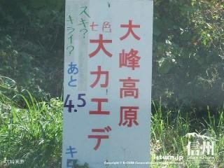 大峰高原大カエデ あと4.5キロ
