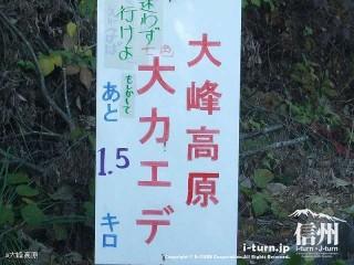 大峰高原大カエデ あと1.5キロ