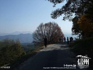 大峰高原 アズキナシの木への道