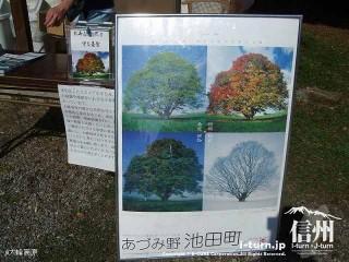 大峰高原中カエデ 大カエデの四季折々の姿ポスター