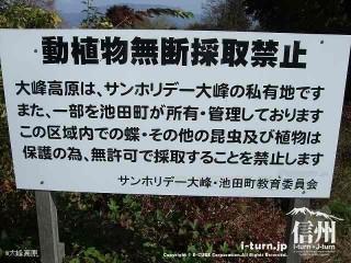 大峰高原中カエデ 動植物無断採取禁止