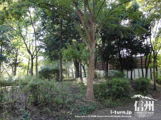 長野運動公園には自然もいっぱいあります