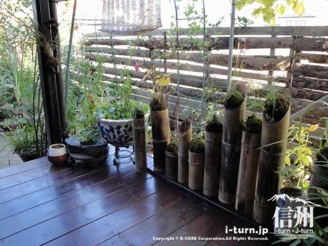 花尋庵 和室から庭