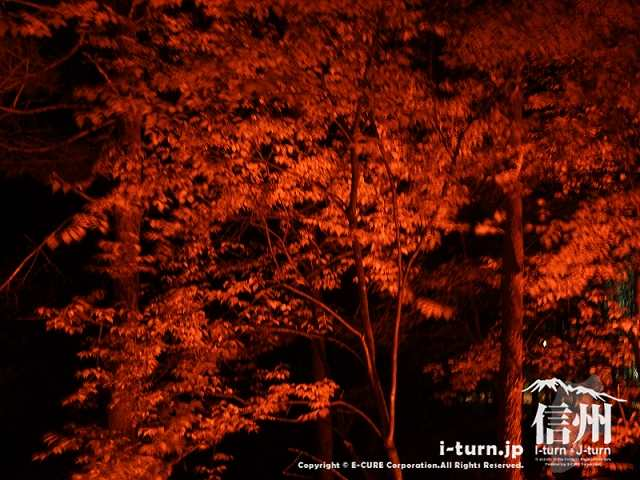 アルプスあかりの森 樹冠ライトアップ(赤)