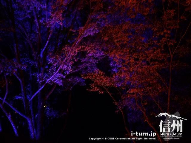 アルプスあかりの森 樹冠ライトアップ(青と赤)