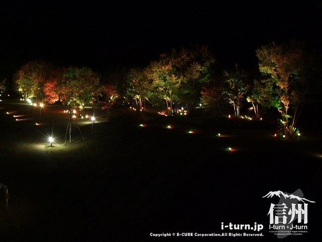 アルプスあかりの森 樹木のライトアップ
