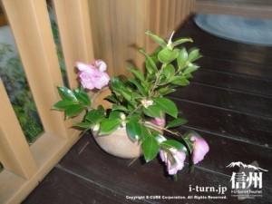 玄関の床においてある、つばきの生花