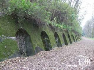 旧国鉄篠ノ井線廃線敷 コケの生えた側壁
