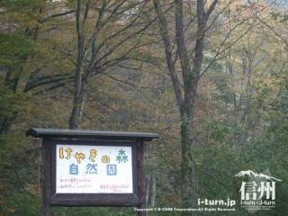 旧国鉄篠ノ井線廃線敷 けやきの森自然園