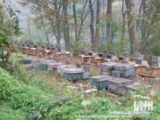 旧国鉄篠ノ井線廃線敷 養蜂場
