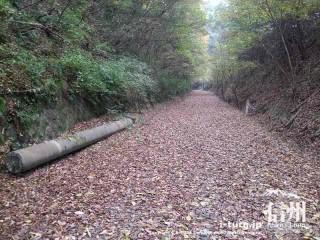 旧国鉄篠ノ井線廃線敷 折れたままの電柱