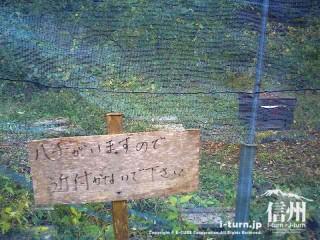 旧国鉄篠ノ井線廃線敷 ハチに注意