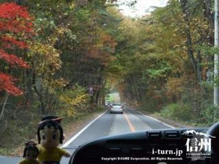 道の両脇の木々は紅葉してきています