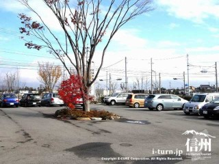 大きなケヤキと駐車場風景