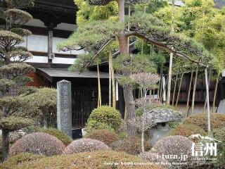 松ノ木・つつじの木の横に記念碑