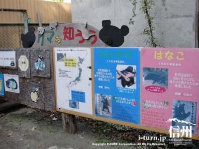 クマを知るための手作りポスター