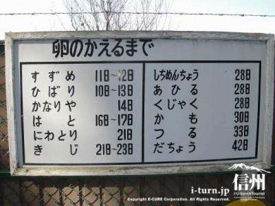 須坂市動物園の通路「卵のかえるまで」