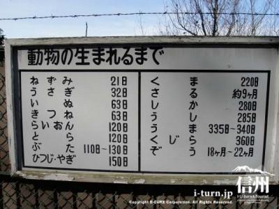 須坂市動物園の通路「動物の生まれるまで」