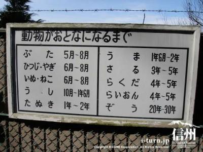 須坂市動物園の通路「動物がおとなになるまで」