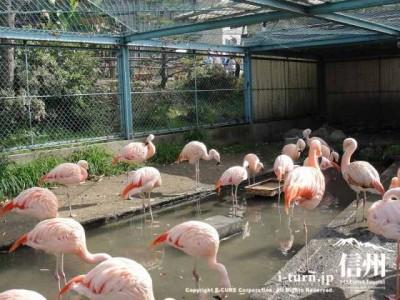 須坂市動物園のフラミンゴ