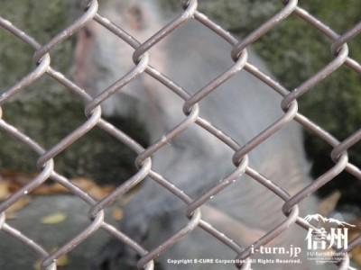 須坂市動物園のタイワンザル