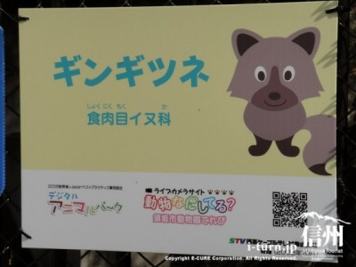 須坂市動物園のギンギツネ