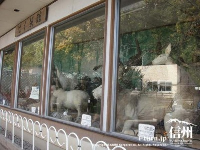 須坂市動物公園のはく製たち