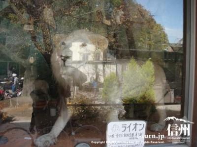 はく製のライオン