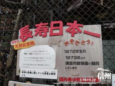 尾白鷲長寿日本一