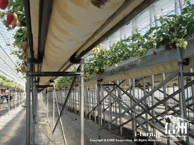 水耕栽培の棚は発砲スチロール