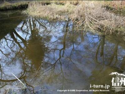 園内が写る池